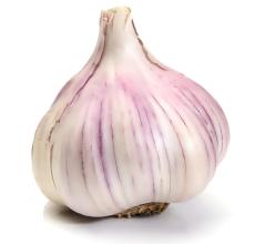 Freshwater Creek Garlic